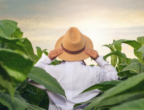 Como aperfeiçoar a gestão da sua fazenda com apenas 3 dicas